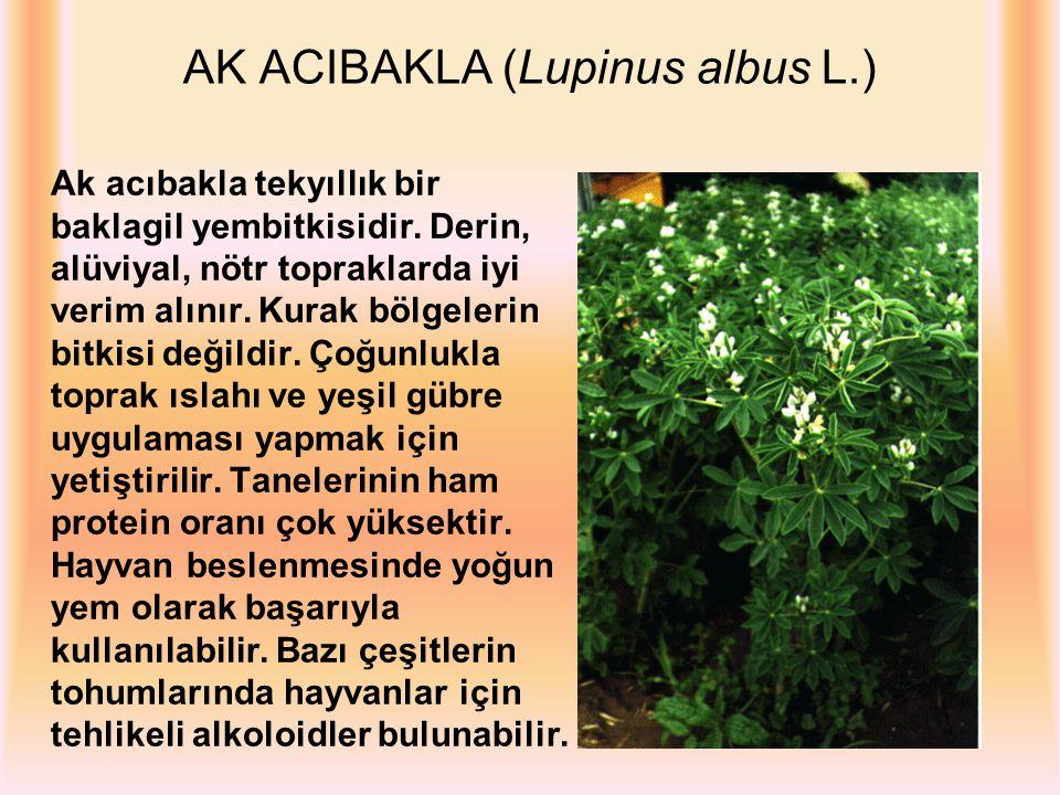 AK ACIBAKLA (Lupinus albus L.) Ak acıbakla tekyıllık bir baklagil yembitkisidir. Derin, alüviyal, nötr topraklarda iyi verim alınır. Kurak bölgelerin