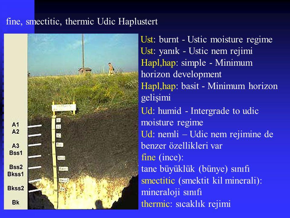 fine, smectitic, thermic Udic Haplustert Ud: humid - Intergrade to udic moisture regime Ud: nemli – Udic nem rejimine de benzer özellikleri var Hapl,h