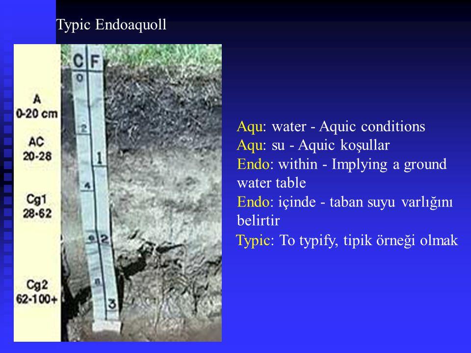Typic Endoaquoll Typic: To typify, tipik örneği olmak Aqu: water - Aquic conditions Aqu: su - Aquic koşullar Endo: within - Implying a ground water ta
