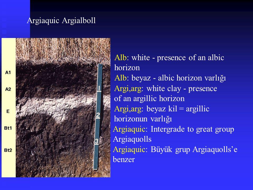 Argiaquic Argialboll Alb: white - presence of an albic horizon Alb: beyaz - albic horizon varlığı Argi,arg: white clay - presence of an argillic horiz