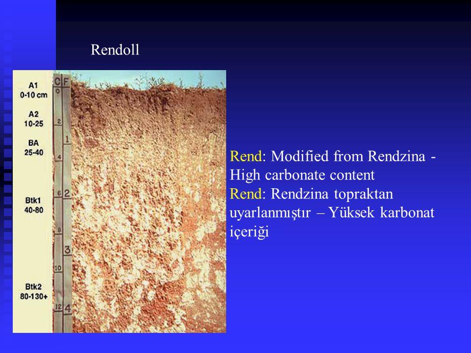 Rendoll Rend: Modified from Rendzina - High carbonate content Rend: Rendzina topraktan uyarlanmıştır – Yüksek karbonat içeriği