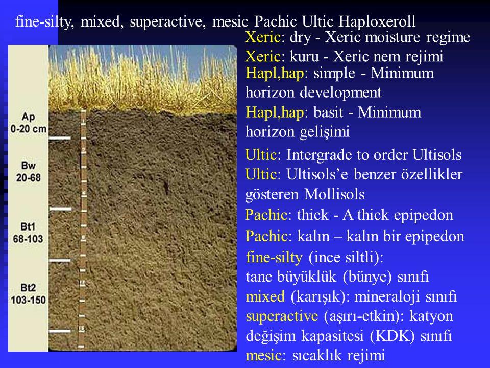 fine-silty, mixed, superactive, mesic Pachic Ultic Haploxeroll Hapl,hap: simple - Minimum horizon development Hapl,hap: basit - Minimum horizon gelişi