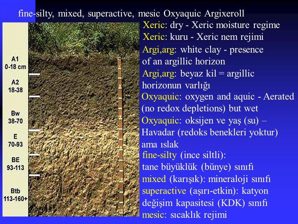 fine-silty, mixed, superactive, mesic Oxyaquic Argixeroll Argi,arg: white clay - presence of an argillic horizon Argi,arg: beyaz kil = argillic horizo