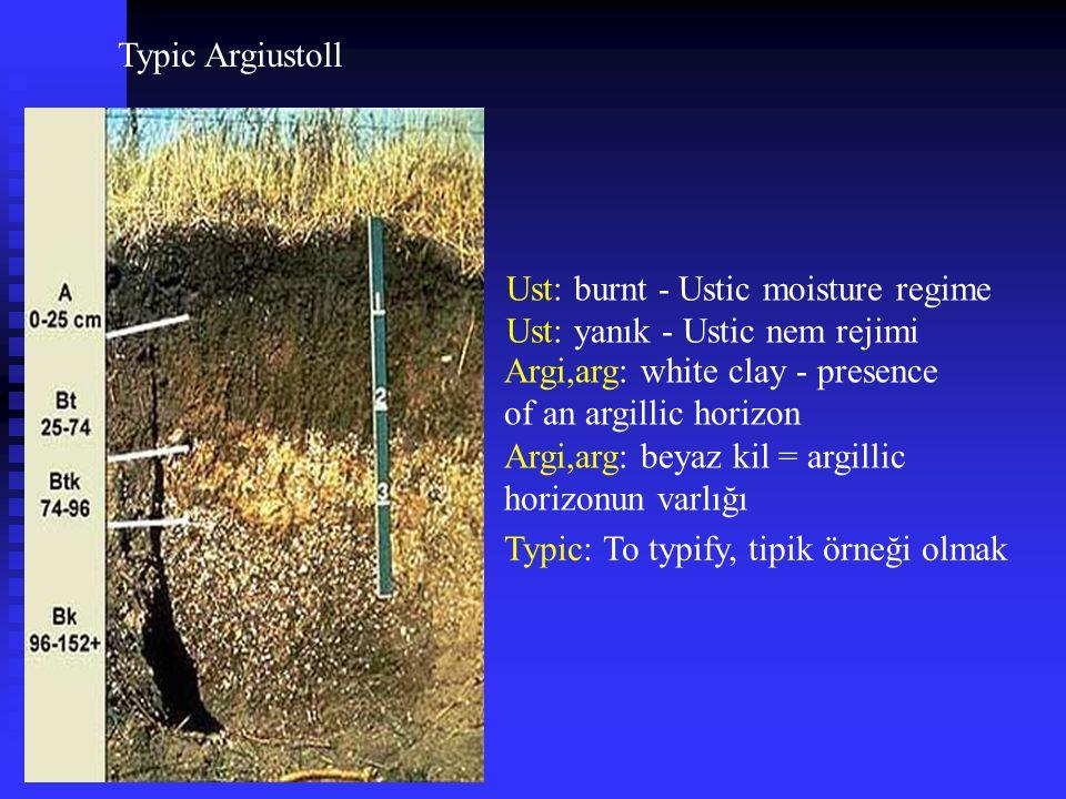 Typic Argiustoll Ust: burnt - Ustic moisture regime Ust: yanık - Ustic nem rejimi Argi,arg: white clay - presence of an argillic horizon Argi,arg: bey