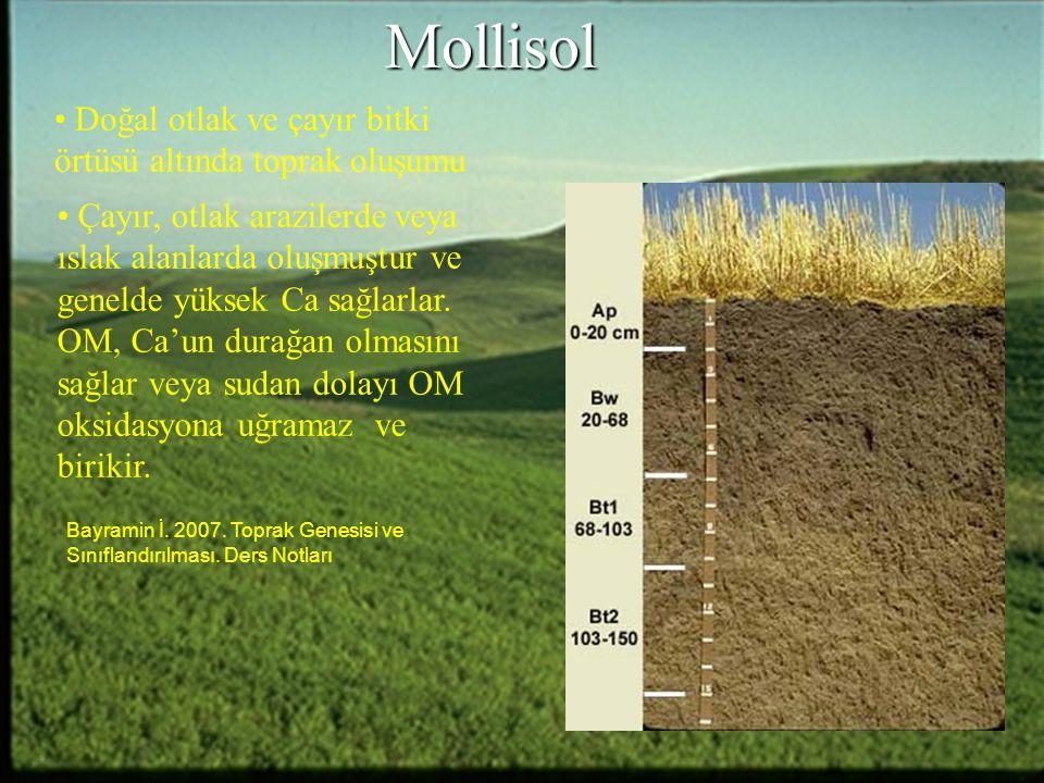 Mollisol Çayır, otlak arazilerde veya ıslak alanlarda oluşmuştur ve genelde yüksek Ca sağlarlar. OM, Ca'un durağan olmasını sağlar veya sudan dolayı O