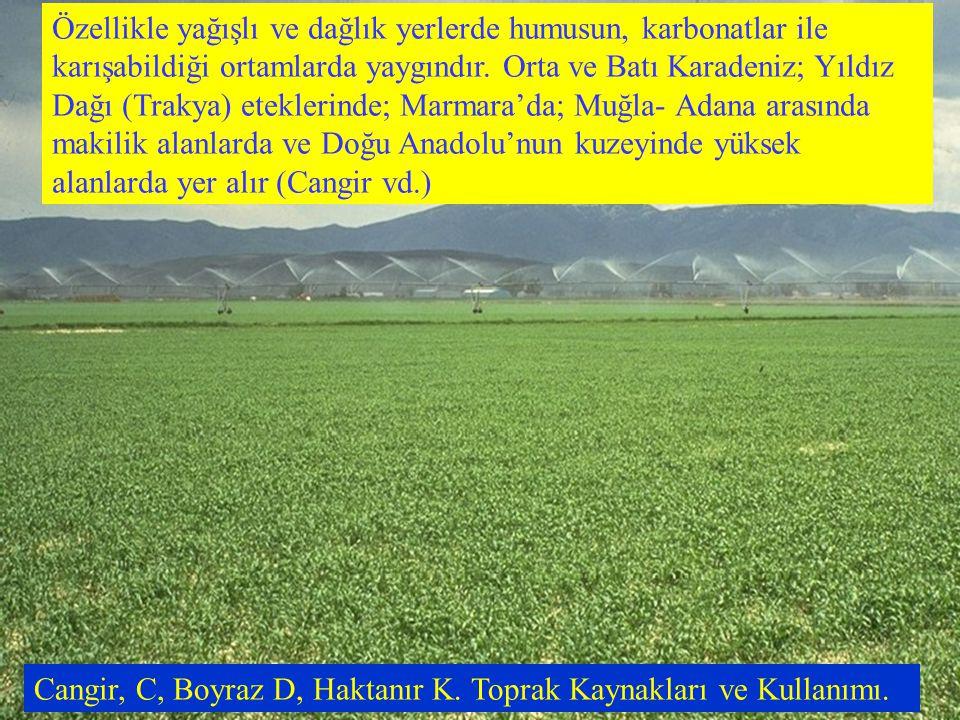 Özellikle yağışlı ve dağlık yerlerde humusun, karbonatlar ile karışabildiği ortamlarda yaygındır. Orta ve Batı Karadeniz; Yıldız Dağı (Trakya) etekler