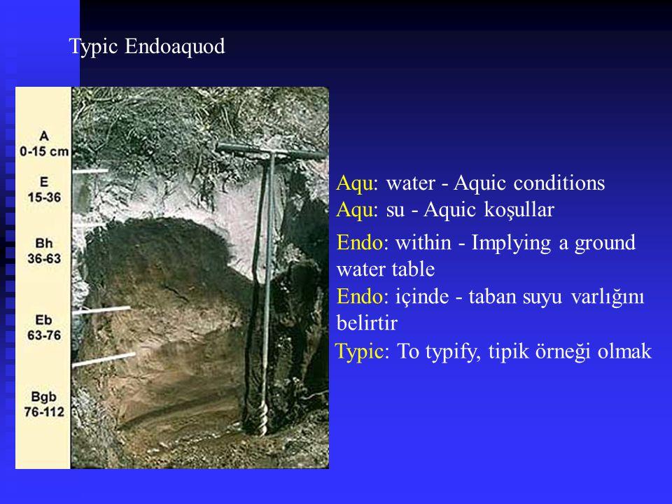 Typic Endoaquod Aqu: water - Aquic conditions Aqu: su - Aquic koşullar Typic: To typify, tipik örneği olmak Endo: within - Implying a ground water tab