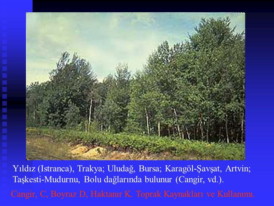 Yıldız (Istranca), Trakya; Uludağ, Bursa; Karagöl-Şavşat, Artvin; Taşkesti-Mudurnu, Bolu dağlarında bulunur (Cangir, vd.). Cangir, C, Boyraz D, Haktan