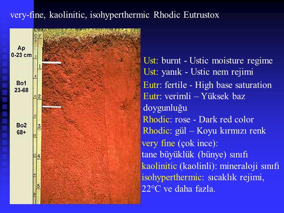 very-fine, kaolinitic, isohyperthermic Rhodic Eutrustox Ust: burnt - Ustic moisture regime Ust: yanık - Ustic nem rejimi Eutr: fertile - High base sat