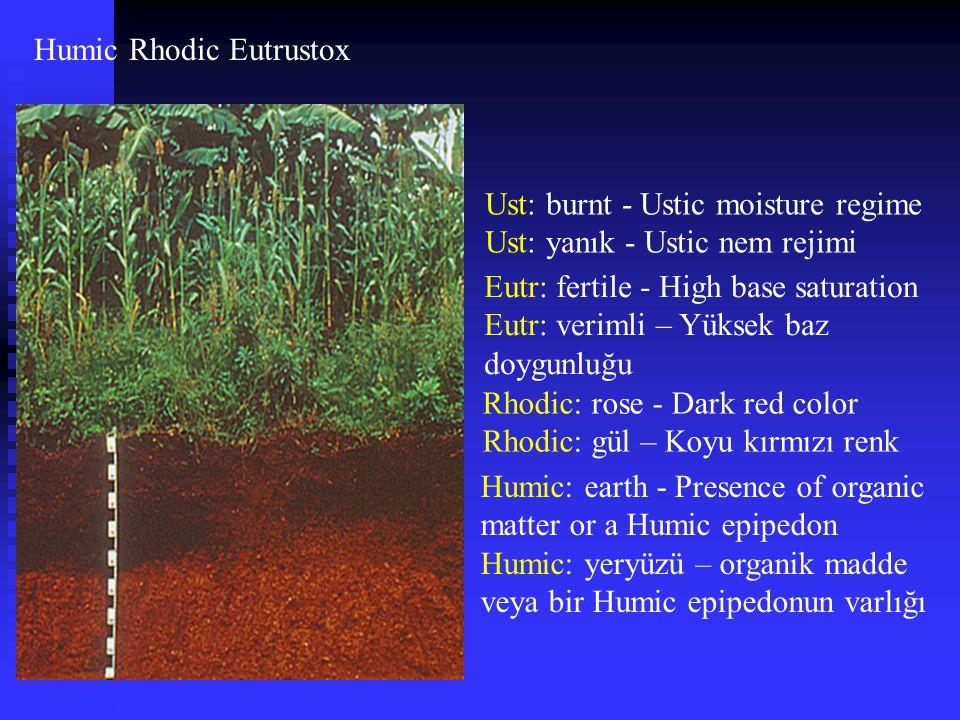 Humic Rhodic Eutrustox Ust: burnt - Ustic moisture regime Ust: yanık - Ustic nem rejimi Eutr: fertile - High base saturation Eutr: verimli – Yüksek ba