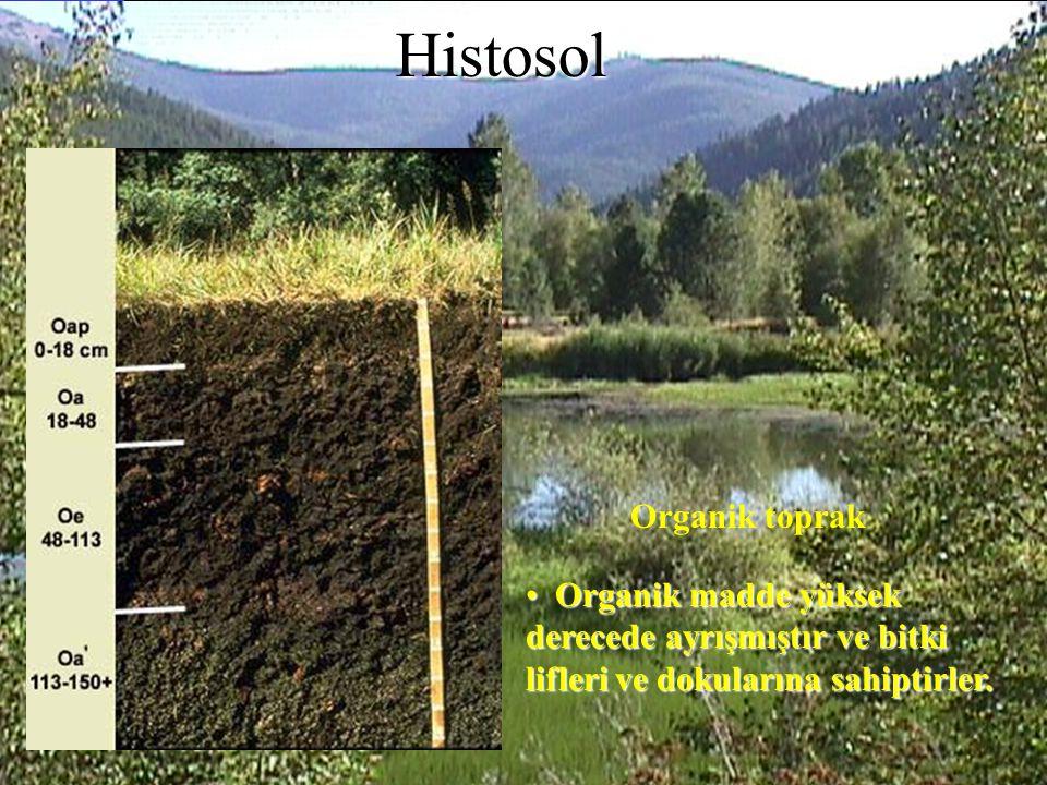 Organik madde yüksek derecede ayrışmıştır ve bitki lifleri ve dokularına sahiptirler. Organik madde yüksek derecede ayrışmıştır ve bitki lifleri ve do