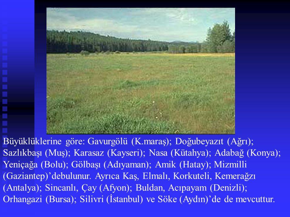 Büyüklüklerine göre: Gavurgölü (K.maraş); Doğubeyazıt (Ağrı); Sazlıkbaşı (Muş); Karasaz (Kayseri); Nasa (Kütahya); Adabağ (Konya); Yeniçağa (Bolu); Gö