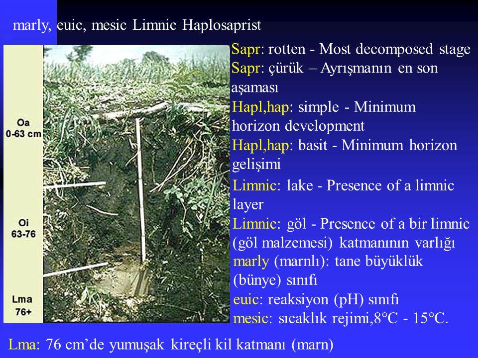 Lma: 76 cm'de yumuşak kireçli kil katmanı (marn) marly, euic, mesic Limnic Haplosaprist Sapr: rotten - Most decomposed stage Sapr: çürük – Ayrışmanın