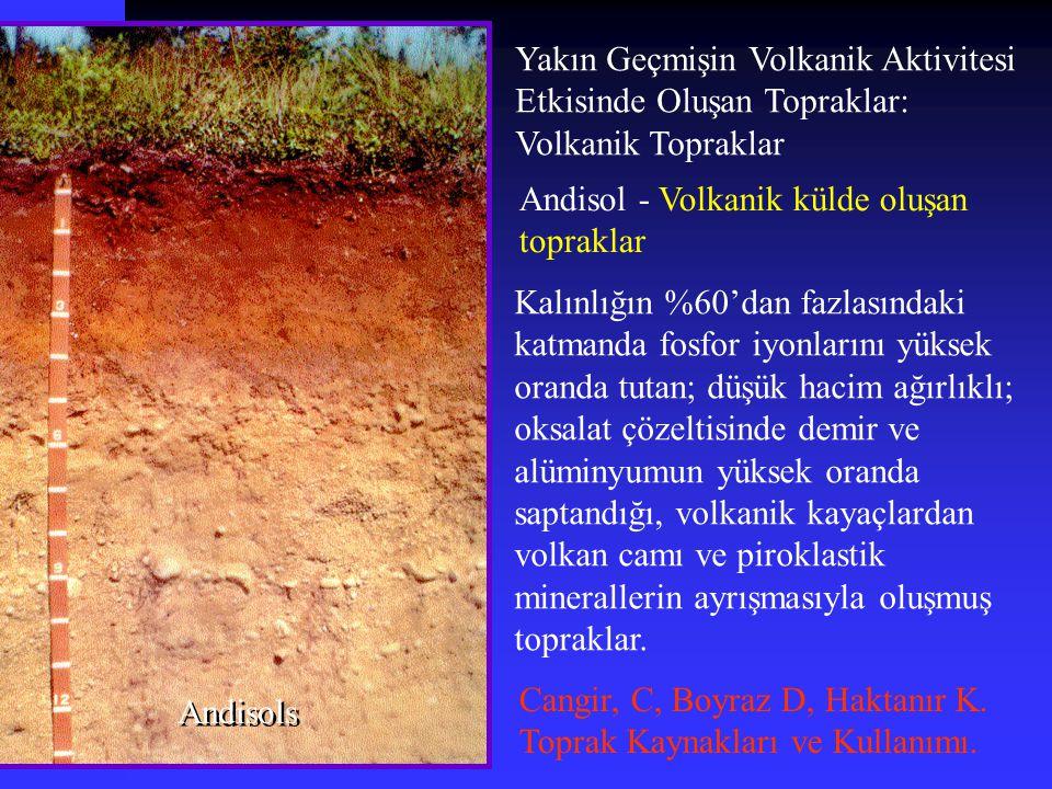 Yakın Geçmişin Volkanik Aktivitesi Etkisinde Oluşan Topraklar: Volkanik Topraklar Andisols Andisol - Volkanik külde oluşan topraklar Kalınlığın %60'da