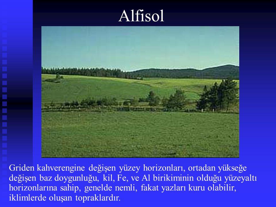 Alfisol Griden kahverengine değişen yüzey horizonları, ortadan yükseğe değişen baz doygunluğu, kil, Fe, ve Al birikiminin olduğu yüzeyaltı horizonları
