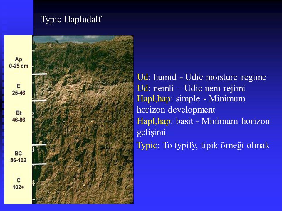 Typic Hapludalf Ud: humid - Udic moisture regime Ud: nemli – Udic nem rejimi Hapl,hap: simple - Minimum horizon development Hapl,hap: basit - Minimum