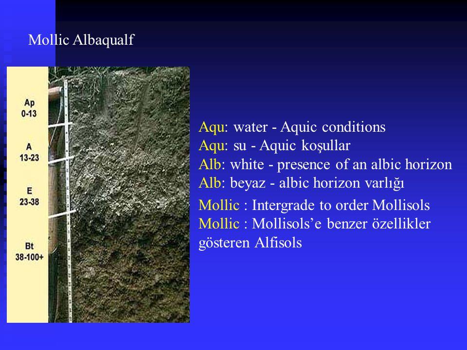 Mollic Albaqualf Aqu: water - Aquic conditions Aqu: su - Aquic koşullar Alb: white - presence of an albic horizon Alb: beyaz - albic horizon varlığı M