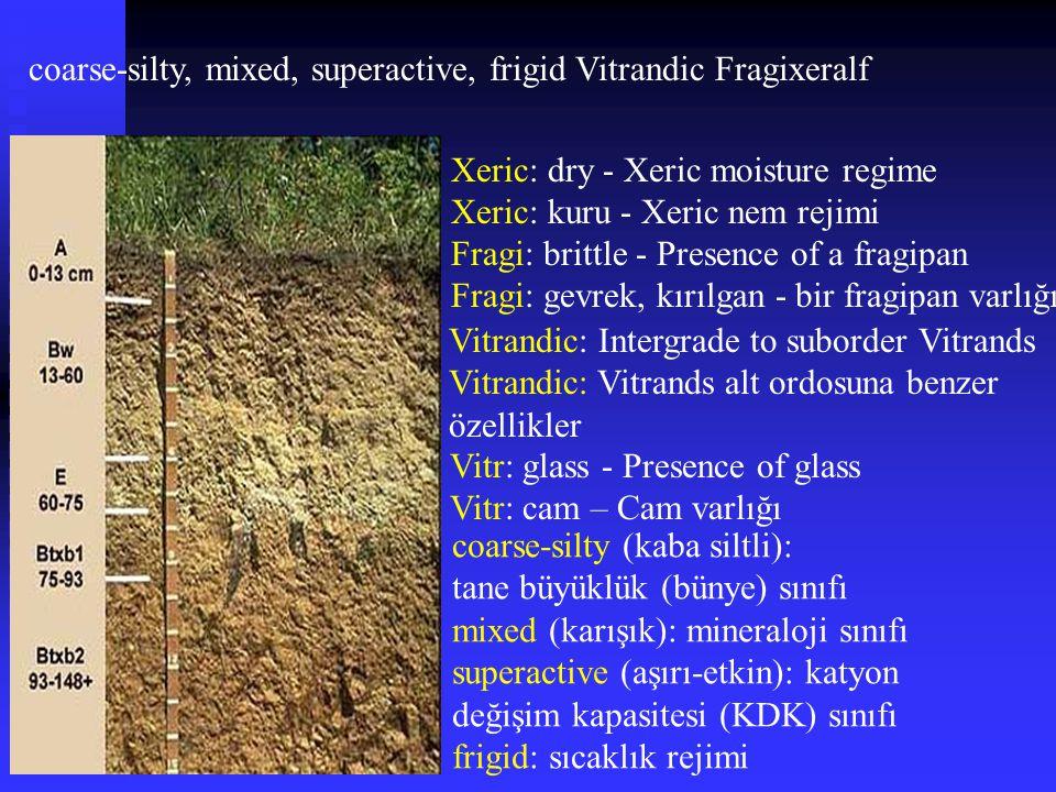 coarse-silty, mixed, superactive, frigid Vitrandic Fragixeralf Fragi: brittle - Presence of a fragipan Fragi: gevrek, kırılgan - bir fragipan varlığı