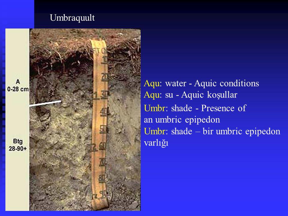 Umbraquult Umbr: shade - Presence of an umbric epipedon Umbr: shade – bir umbric epipedon varlığı Aqu: water - Aquic conditions Aqu: su - Aquic koşull