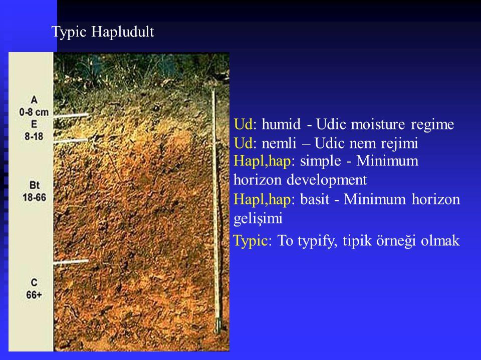 Typic Hapludult Ud: humid - Udic moisture regime Ud: nemli – Udic nem rejimi Hapl,hap: simple - Minimum horizon development Hapl,hap: basit - Minimum