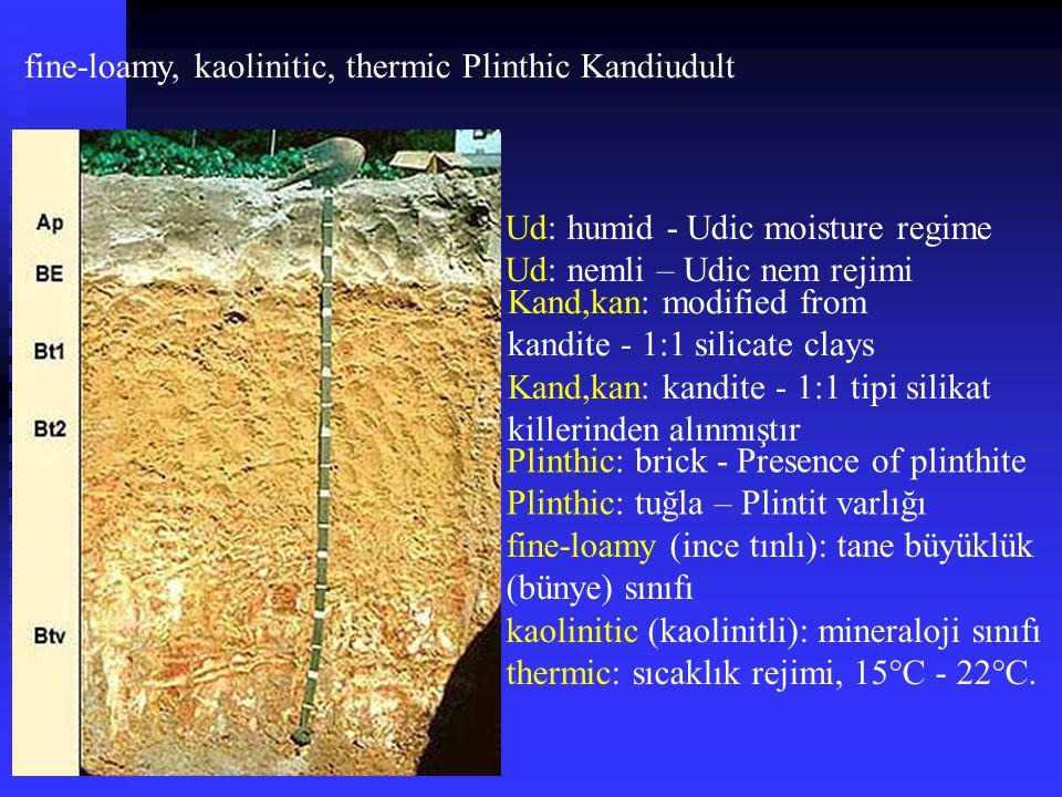 fine-loamy, kaolinitic, thermic Plinthic Kandiudult Plinthic: brick - Presence of plinthite Plinthic: tuğla – Plintit varlığı Kand,kan: modified from