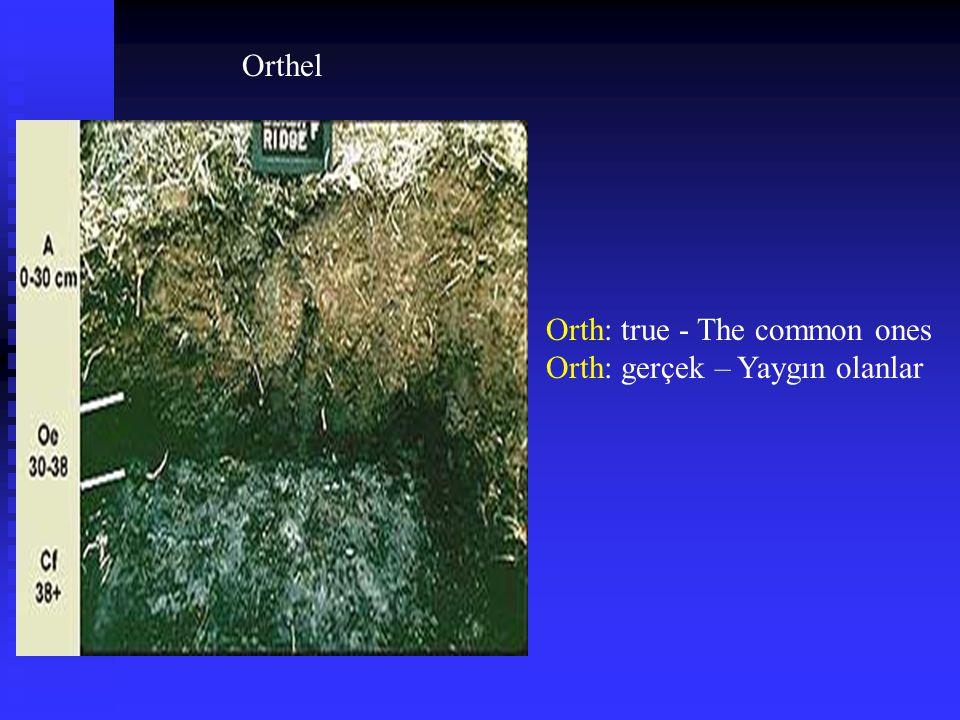 Orthel Orth: true - The common ones Orth: gerçek – Yaygın olanlar