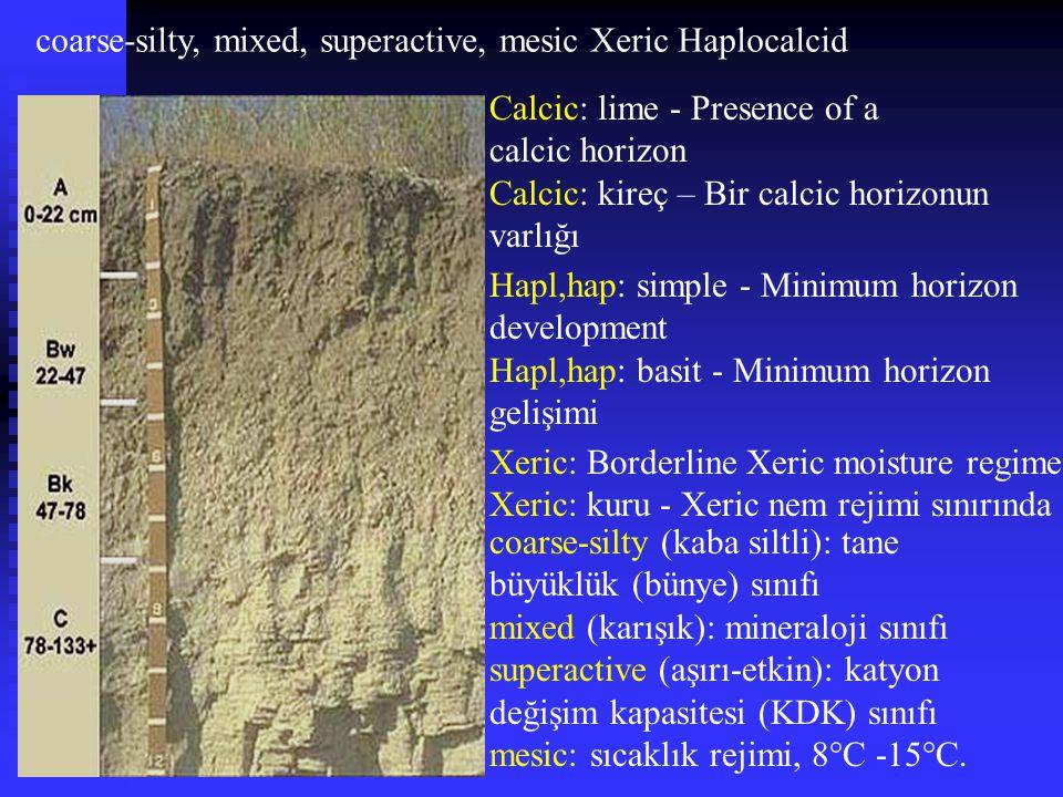 coarse-silty, mixed, superactive, mesic Xeric Haplocalcid Xeric: Borderline Xeric moisture regime Xeric: kuru - Xeric nem rejimi sınırında Hapl,hap: s