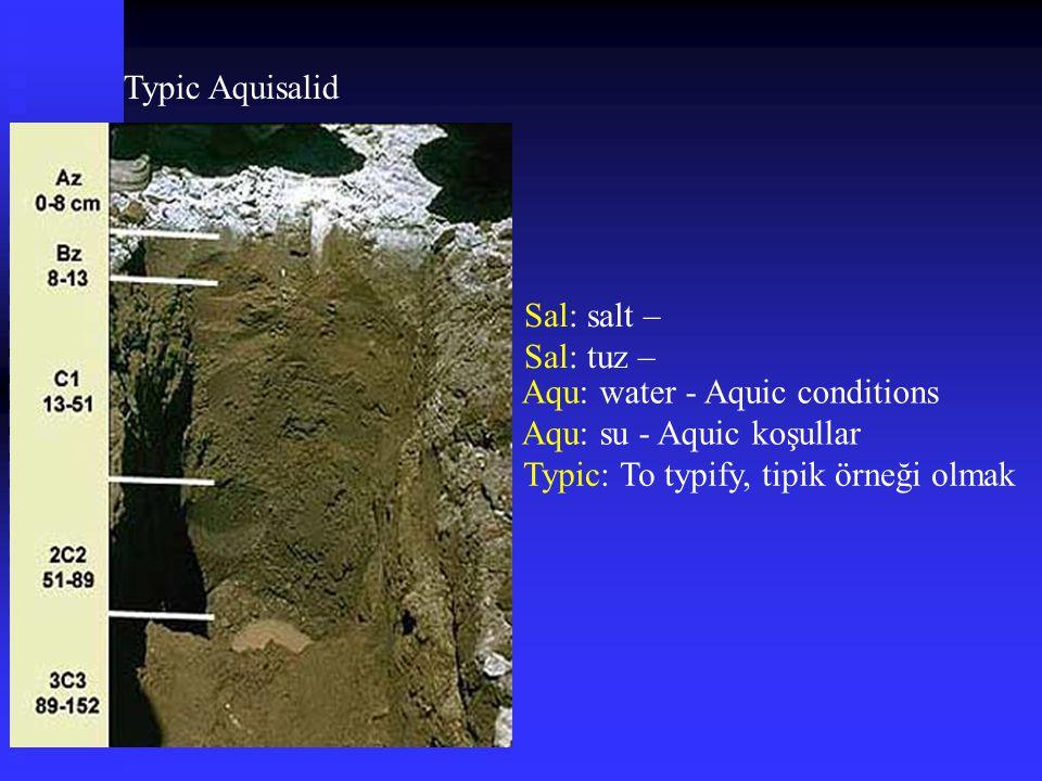 Typic Aquisalid Sal: salt – Sal: tuz – Aqu: water - Aquic conditions Aqu: su - Aquic koşullar Typic: To typify, tipik örneği olmak