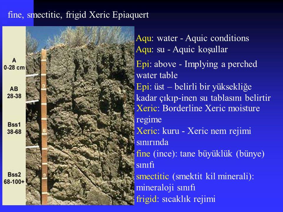 fine, smectitic, frigid Xeric Epiaquert fine (ince): tane büyüklük (bünye) sınıfı smectitic (smektit kil minerali): mineraloji sınıfı frigid: sıcaklık