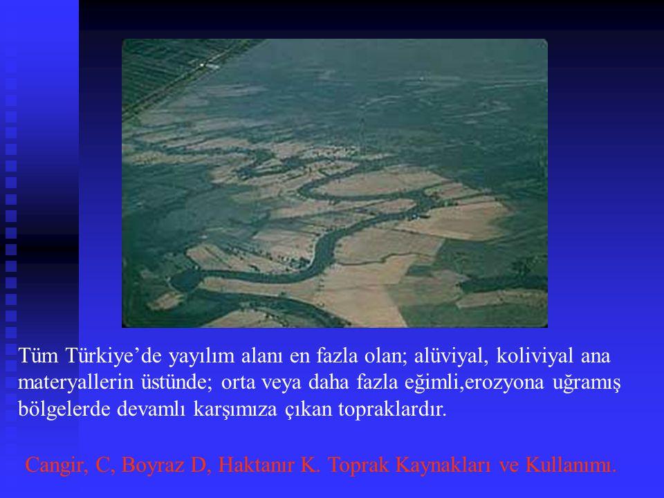Tüm Türkiye'de yayılım alanı en fazla olan; alüviyal, koliviyal ana materyallerin üstünde; orta veya daha fazla eğimli,erozyona uğramış bölgelerde dev
