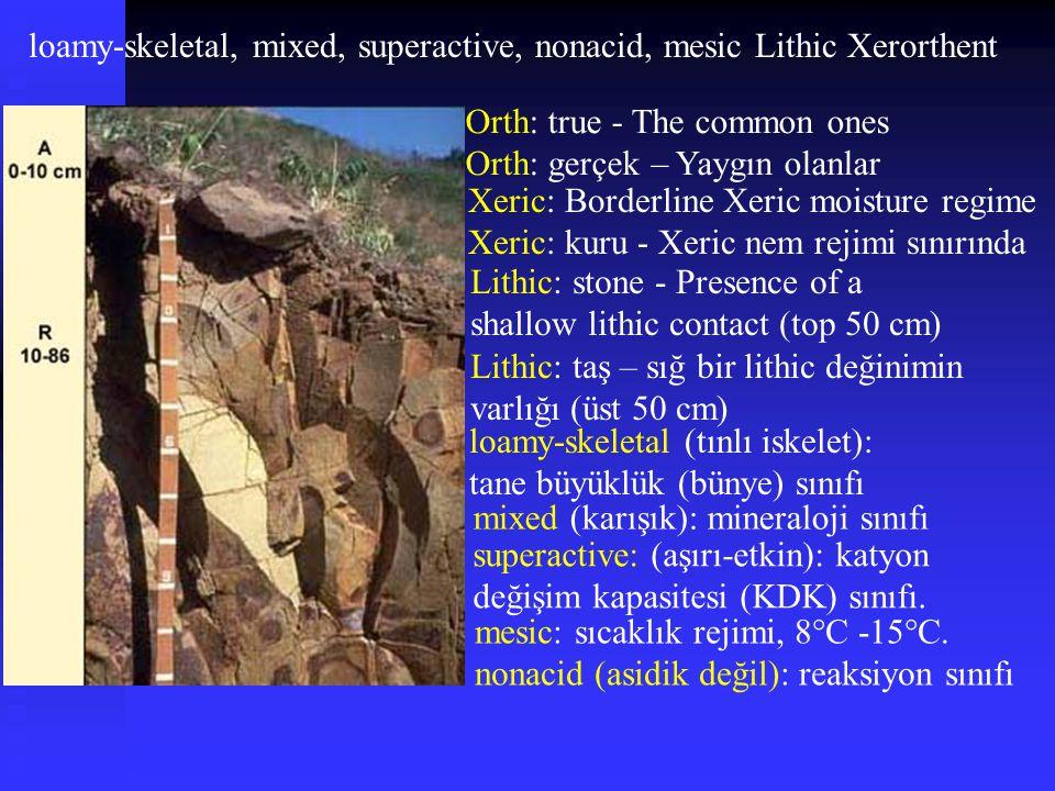 loamy-skeletal, mixed, superactive, nonacid, mesic Lithic Xerorthent mixed (karışık): mineraloji sınıfı superactive: (aşırı-etkin): katyon değişim kap
