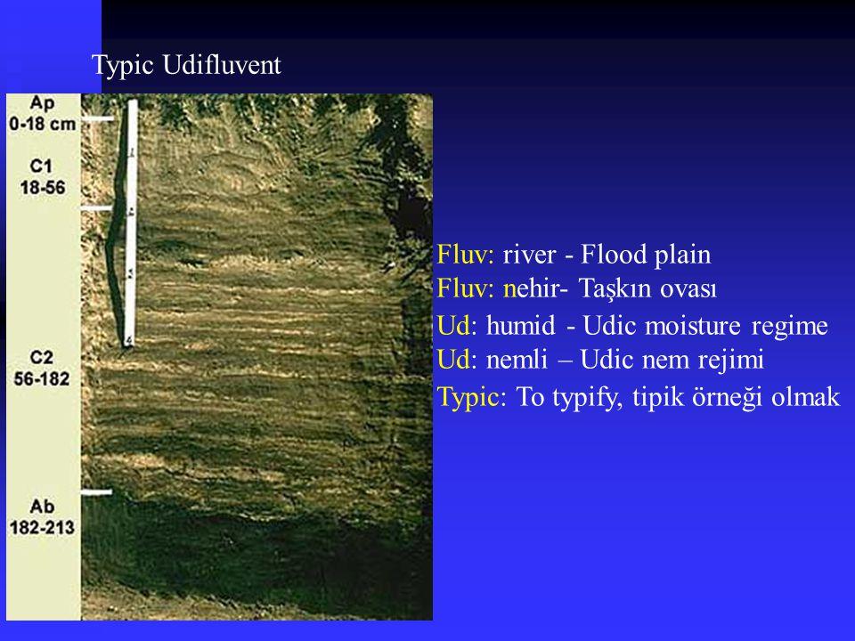 Typic Udifluvent Fluv: river - Flood plain Fluv: nehir- Taşkın ovası Typic: To typify, tipik örneği olmak Ud: humid - Udic moisture regime Ud: nemli –