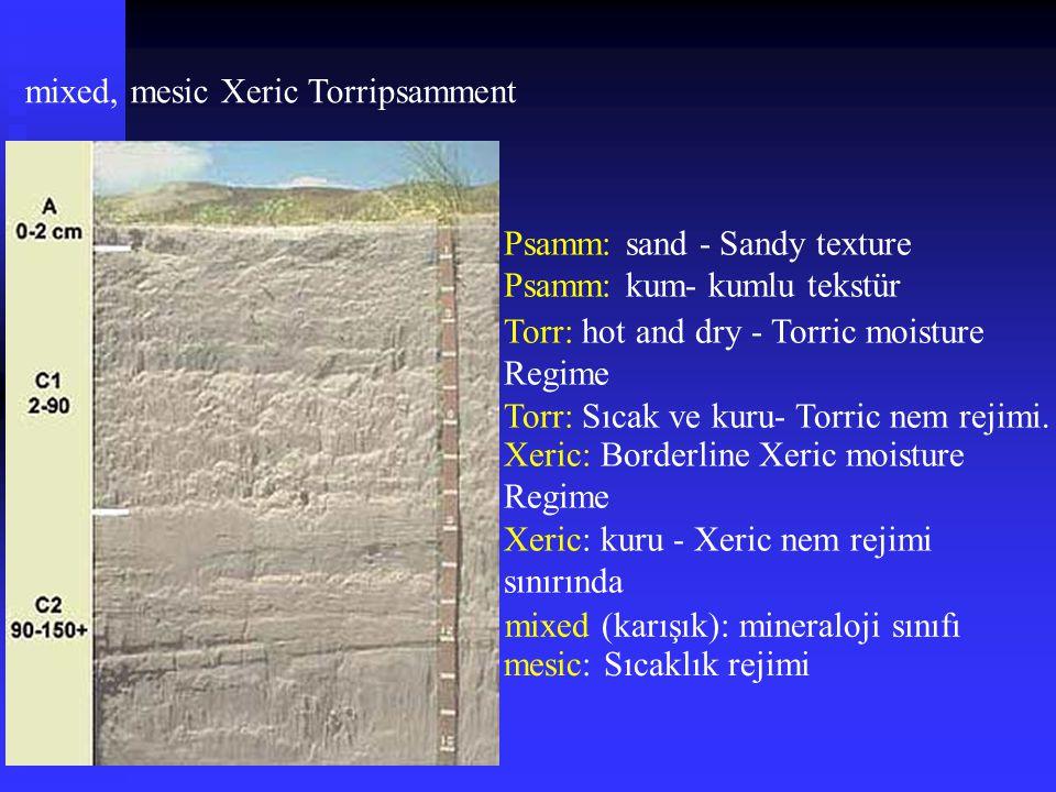 mixed, mesic Xeric Torripsamment Psamm: sand - Sandy texture Psamm: kum- kumlu tekstür Torr: hot and dry - Torric moisture Regime Torr: Sıcak ve kuru-