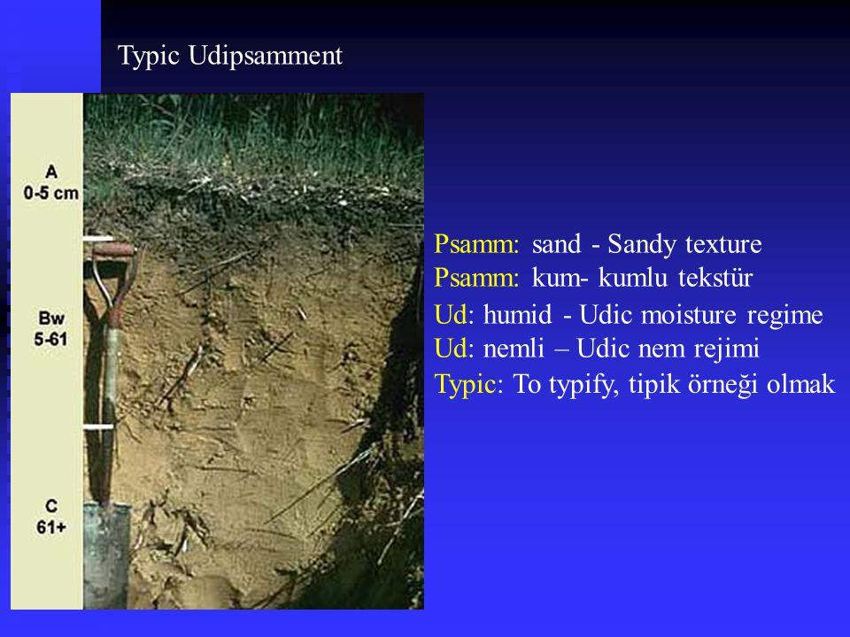 Typic Udipsamment Psamm: sand - Sandy texture Psamm: kum- kumlu tekstür Ud: humid - Udic moisture regime Ud: nemli – Udic nem rejimi Typic: To typify,