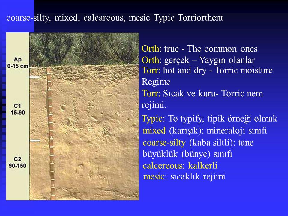 coarse-silty, mixed, calcareous, mesic Typic Torriorthent Orth: true - The common ones Orth: gerçek – Yaygın olanlar Torr: hot and dry - Torric moistu