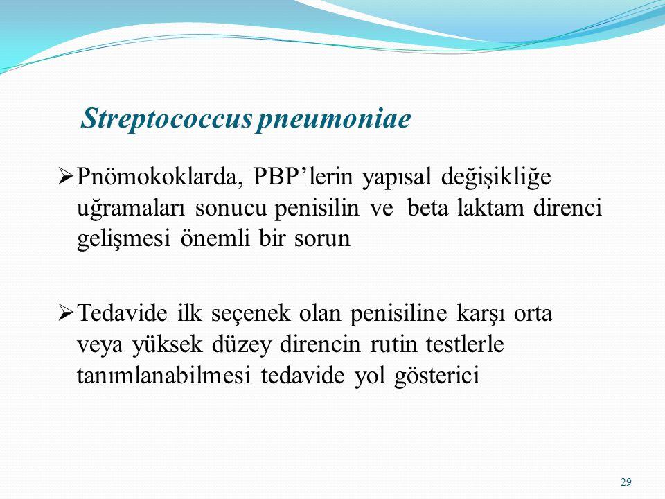 29 Streptococcus pneumoniae  Pnömokoklarda, PBP'lerin yapısal değişikliğe uğramaları sonucu penisilin ve beta laktam direnci gelişmesi önemli bir sorun  Tedavide ilk seçenek olan penisiline karşı orta veya yüksek düzey direncin rutin testlerle tanımlanabilmesi tedavide yol gösterici