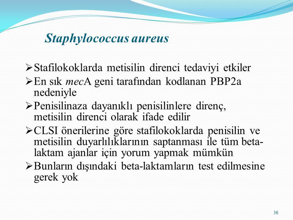 36 Staphylococcus aureus  Stafilokoklarda metisilin direnci tedaviyi etkiler  En sık mecA geni tarafından kodlanan PBP2a nedeniyle  Penisilinaza dayanıklı penisilinlere direnç, metisilin direnci olarak ifade edilir  CLSI önerilerine göre stafilokoklarda penisilin ve metisilin duyarlılıklarının saptanması ile tüm beta- laktam ajanlar için yorum yapmak mümkün  Bunların dışındaki beta-laktamların test edilmesine gerek yok