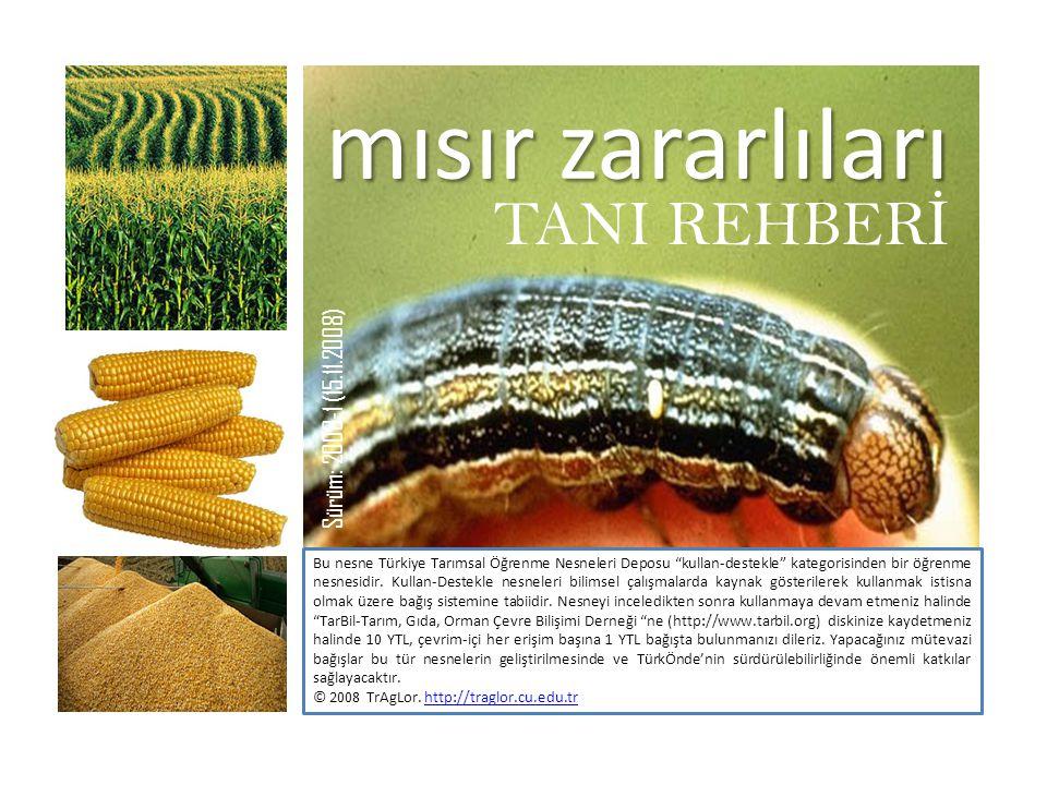 """mısır zararlıları TANI REHBER İ Bu nesne Türkiye Tarımsal Öğrenme Nesneleri Deposu """"kullan-destekle"""" kategorisinden bir öğrenme nesnesidir. Kullan-Des"""