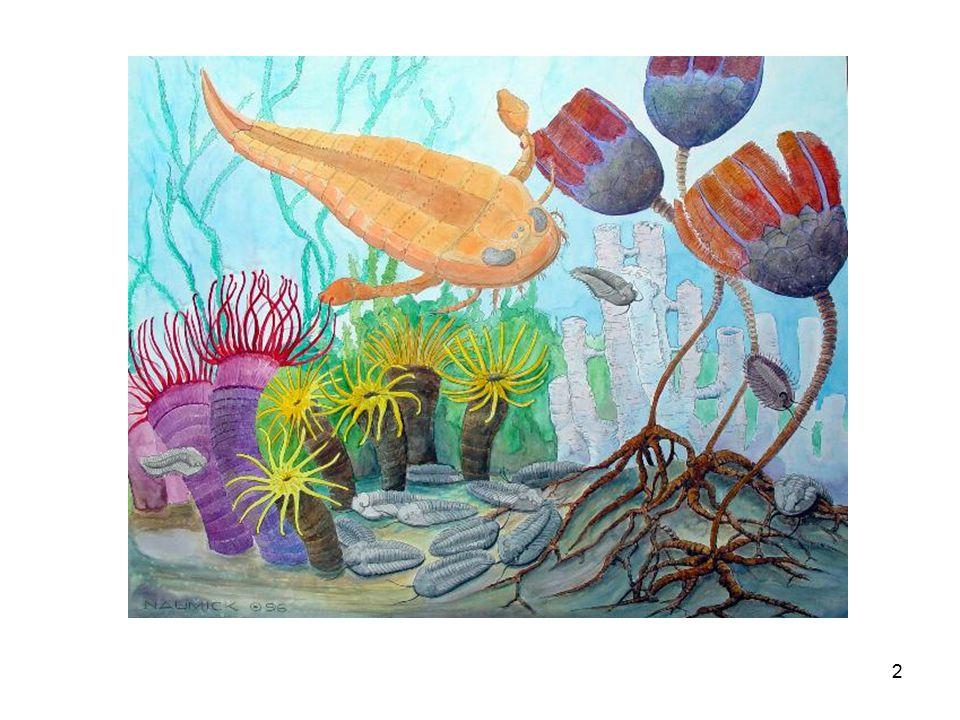 Crinoidea Sınıf Crinoidea deniz laleleri krinoid Kambriyen-Güncel Echinodermata Filum Echinodermata derisi dikenliler - Tümüyle denizel - Bentik –epifaunal / pelajik - Belirli bir dereceye kadar hareketli Füsun Alkaya