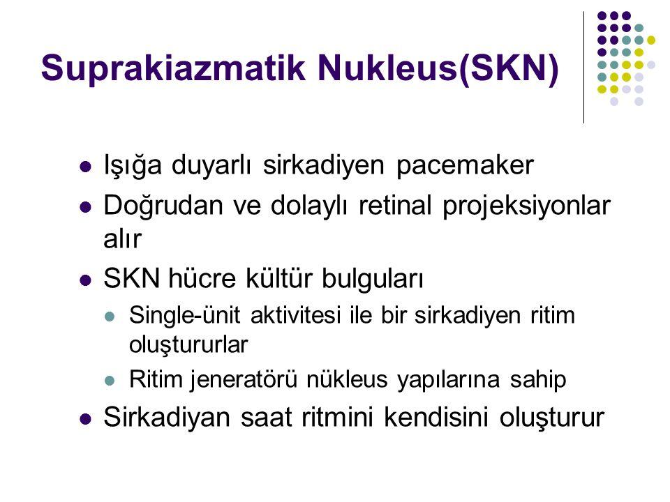 Suprakiazmatik Nukleus(SKN) Işığa duyarlı sirkadiyen pacemaker Doğrudan ve dolaylı retinal projeksiyonlar alır SKN hücre kültür bulguları Single-ünit aktivitesi ile bir sirkadiyen ritim oluştururlar Ritim jeneratörü nükleus yapılarına sahip Sirkadiyan saat ritmini kendisini oluşturur