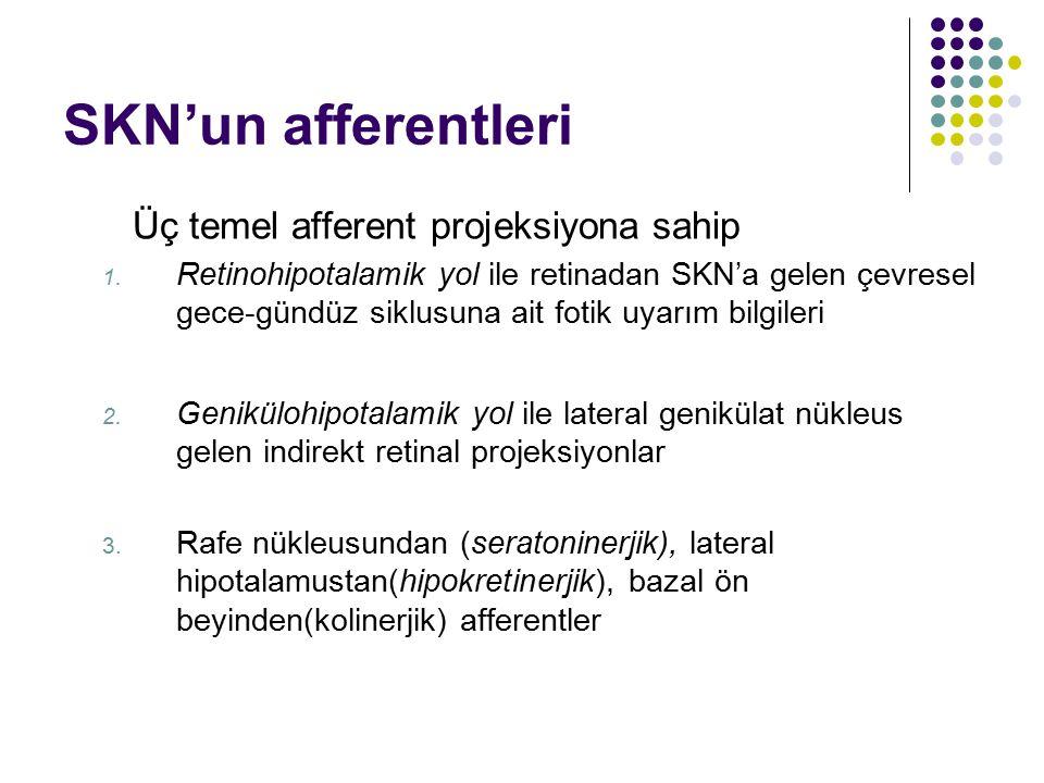 SKN'un afferentleri Üç temel afferent projeksiyona sahip 1. Retinohipotalamik yol ile retinadan SKN'a gelen çevresel gece-gündüz siklusuna ait fotik u