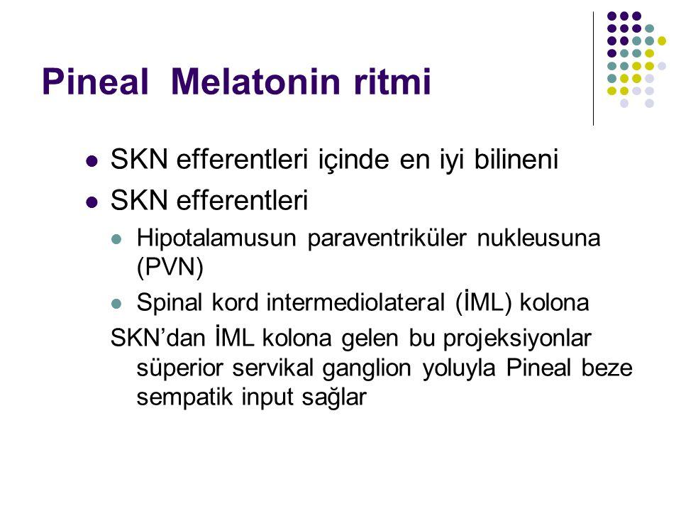 Pineal Melatonin ritmi SKN efferentleri içinde en iyi bilineni SKN efferentleri Hipotalamusun paraventriküler nukleusuna (PVN) Spinal kord intermediol