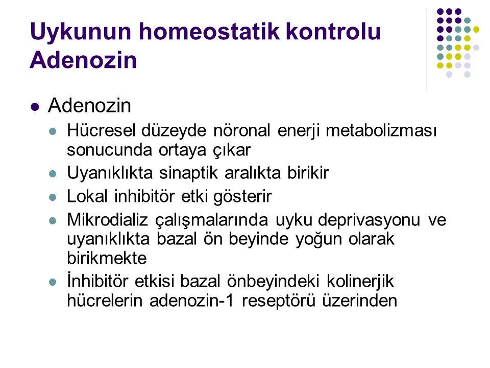 Uykunun homeostatik kontrolu Adenozin Adenozin Hücresel düzeyde nöronal enerji metabolizması sonucunda ortaya çıkar Uyanıklıkta sinaptik aralıkta biri
