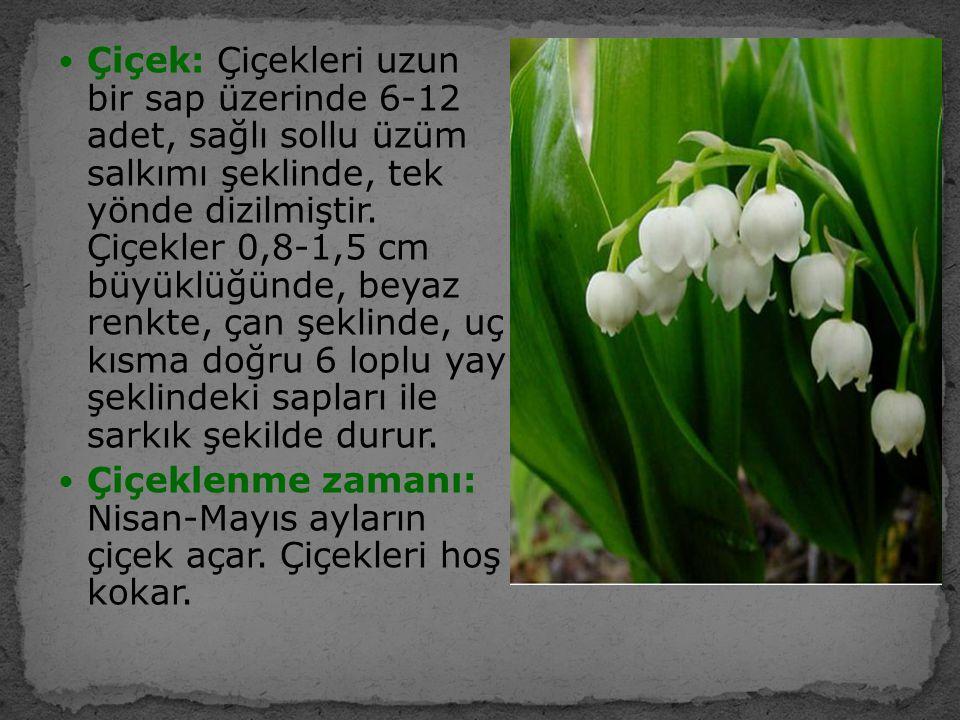 Çiçek: Çiçekleri uzun bir sap üzerinde 6-12 adet, sağlı sollu üzüm salkımı şeklinde, tek yönde dizilmiştir. Çiçekler 0,8-1,5 cm büyüklüğünde, beyaz re