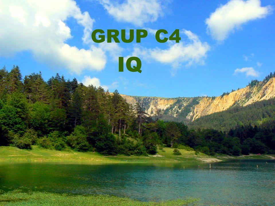 GRUP C4 IQ