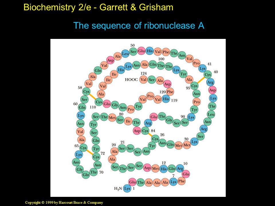 Biochemistry 2/e - Garrett & Grisham Copyright © 1999 by Harcourt Brace & Company The sequence of ribonuclease A