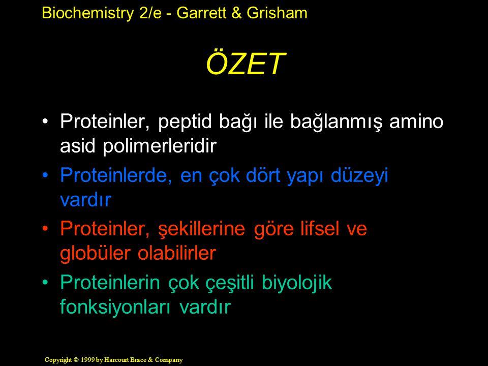 Biochemistry 2/e - Garrett & Grisham Copyright © 1999 by Harcourt Brace & Company ÖZET Proteinler, peptid bağı ile bağlanmış amino asid polimerleridir Proteinlerde, en çok dört yapı düzeyi vardır Proteinler, şekillerine göre lifsel ve globüler olabilirler Proteinlerin çok çeşitli biyolojik fonksiyonları vardır