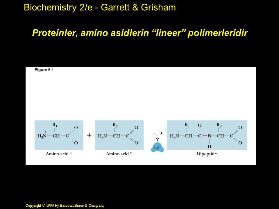 "Biochemistry 2/e - Garrett & Grisham Copyright © 1999 by Harcourt Brace & Company Proteinler, amino asidlerin ""lineer"" polimerleridir"
