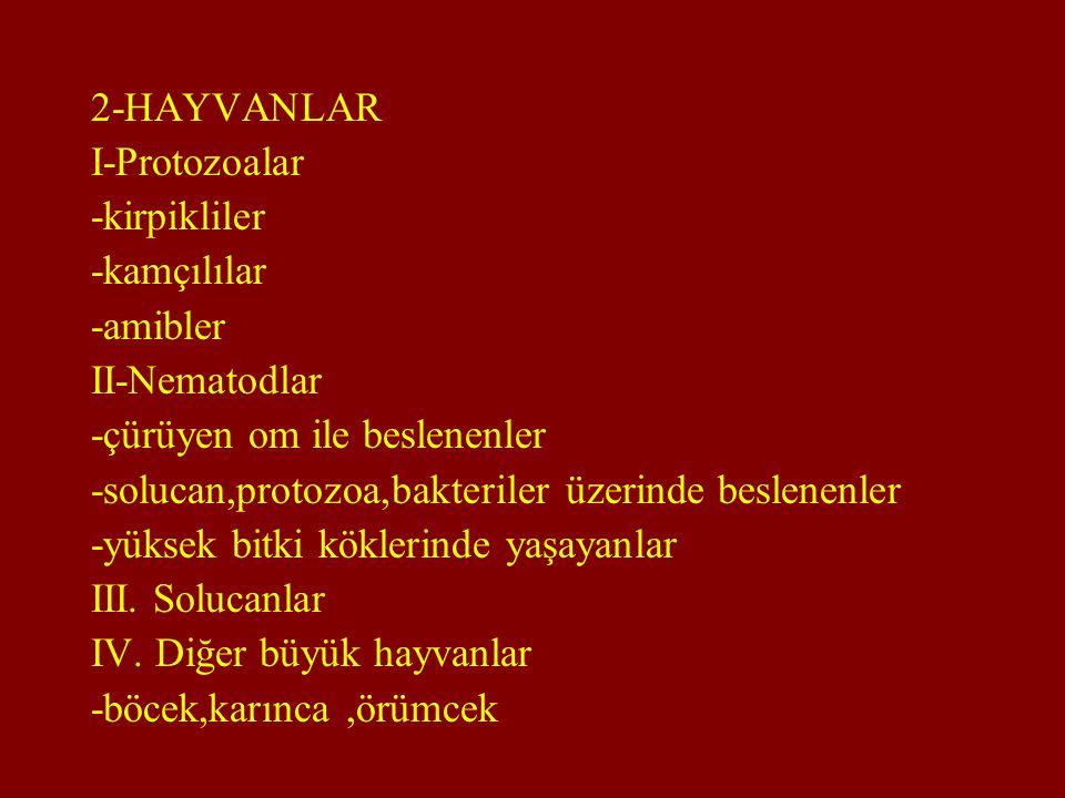 2-HAYVANLAR I-Protozoalar -kirpikliler -kamçılılar -amibler II-Nematodlar -çürüyen om ile beslenenler -solucan,protozoa,bakteriler üzerinde beslenenle