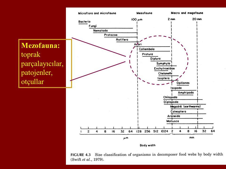 Mezofauna: toprak parçalayıcılar, patojenler, otçullar